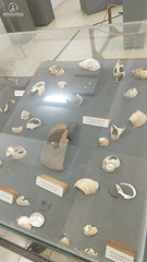 "Excursão para Monte Alto - Museus Histórico - Cultural - Paleontologia • <a style=""font-size:0.8em;"" href=""http://www.flickr.com/photos/134435427@N04/48990970043/"" target=""_blank"">View on Flickr</a>"
