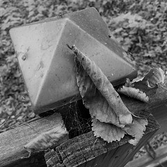 fence post with adornments (karma (Karen)) Tags: parkschool pikesville maryland fences fencepost leaves cobwebs spiders dof bokeh mono bw hmbt squared