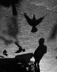 (sharmi_diya06) Tags: street streetphotography streetphot abstract people birds light shadows morning outside letsexplore