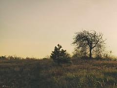 golden-chill-hour (LiquidStep) Tags: goldenhour chill autumn landscape nature trees olympusomdem10markii panasoniclumix25mmf17