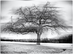 The mysterious Tree... (Ody on the mount) Tags: abstrakt anlässe bäume dorf em5ii fototour landschaft omd olympus pflanzen schwäbischealb silhouette wanderung abstract art bw blackandwhite landscape miraclesofcreation monochrome sw schwarzweis trees village