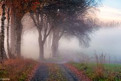 08112015-_DSC0022 (vidjanma) Tags: arbres automne brume chemin fagnoux matin