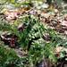 Delamere Forest | Autumn Light