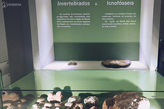 "Excursão para Monte Alto - Museus Histórico - Cultural - Paleontologia • <a style=""font-size:0.8em;"" href=""http://www.flickr.com/photos/134435427@N04/48991713352/"" target=""_blank"">View on Flickr</a>"