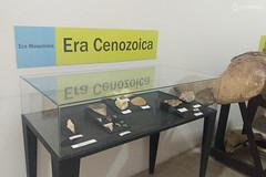 "Excursão para Monte Alto - Museus Histórico - Cultural - Paleontologia • <a style=""font-size:0.8em;"" href=""http://www.flickr.com/photos/134435427@N04/48991713567/"" target=""_blank"">View on Flickr</a>"