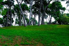 Parc del Turó de la Peira (Fnikos) Tags: parc park parque parco nature naturaleza natura natur tree wood grass bench color colour colores colours colors green outside outdoor