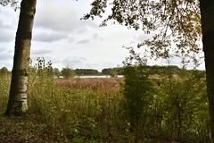 Vlaardingen (Hugo Sluimer) Tags: vlaardingen broekpolder broekpoldervlaardingen holland nature nikon herfst nederland natuur d500 naturephotography zuidholland natuurfotografie natuurfotograaf nikond500
