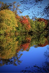 Afternoon at The Lake (Atodog) Tags: shy lakelleaves fall autumn strawbridgelake nj moorestown gbpics canon5dmkiv
