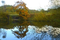 Birchenwood Country Park, Staffordshire (philept1) Tags: water reflection trees outdoors autumn staffordshire kidsgrove lake countryside view