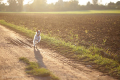 and paula's happy (photos4dreams) Tags: p4d photos4dreams photos4dreamz vergau canoneos5dmark3 paula dog brothers jackie jackrussel hund puppy hündchen klein small cute