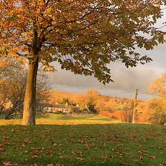 Photo of Late afternoon autumn light