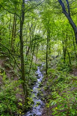 Woods (GarethBell) Tags: beaumaris anglesey 6d canon river water green woods