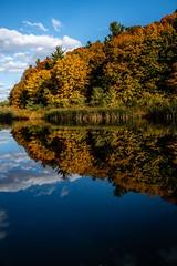 Reflecting Fall (rick miller foto) Tags: x70 fujifilm fuji landscape autumn intense tapestry fall colours color reflecting reflections lake ravine park toronto earlbales