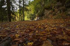 El otoño x los suelos...284/365 (cienfuegos84) Tags: autumn otoño leaf hojas irati