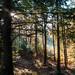 Delamere Forest | Autumn