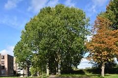 Vlaardingen (Hugo Sluimer) Tags: vlaardingen natuur nature natuurfotografie natuurfotograaf naturephotography herfst nederland zuidholland holland nikon nikond500 d500