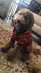 Sadie says Happy Halloween