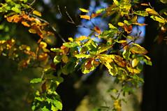 Autumn Leaves (Blue Sky Pix) Tags: autumn leaves colours winster derbyshire peakdistrict nationalpark england walking villagelife dearoldengland lovederbyshire niftyfifty primelens light 5018
