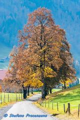 Autumn à La Valsainte (Stefano Procenzano) Tags: lavalsainte cantonfribourg valdecharmey svizzera ch fr autumn automne autunno nikon nikkor d80 nikond80 1685mmf3556gvr 1685mm dx dslr fmount herbst