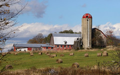 The Harvest (Diane Marshman) Tags: barn farm building buildings silo red top siding wood barnboards metal roof elevator field rural country scene trees hay bales weeds grass clouds blue sky ladder pa pennsylvania nature state gate fence autumn fall season