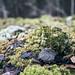 Gammel steinrøys ned Olteruddalen fra jordene_DSC5585_31-10-19