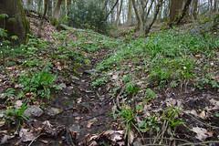 2nd Round (Spotmatix) Tags: 16300mm a68 belgium camera hainaut hamsurheurenalinnes hiking lens places seasons sony sports spring tamron zoomtravel