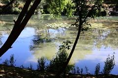 Le Lez (just.Luc) Tags: reflection reflections reflexion river rivier rivière fluss water eau wasser france frankrijk frankreich francia frança montpellier hérault occitanie okzitanien europa europe nature natuur