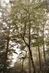 Misty woods- Newfound Gap Rd- Smoky Mountains Fuji xt10 18-55mm (ToddGraves2) Tags: