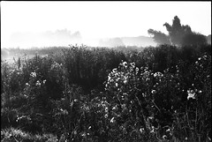 (no49_pierre) Tags: blackandwhite monochrome landscape expired desaturated 35mm film earlyfall