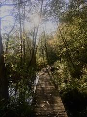 City-jungle (Petraa_) Tags: kralingen kralingsebos 010 rotterdam autumn zon sun tuin garden plants