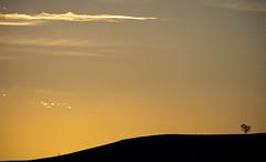 Asura (Keith Midson) Tags: tree lonetree sky sunset clouds hill tasmania canon 5dsr oatlands