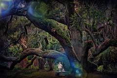 Hallows Eve in Cumberland Island (D'ArcyG) Tags: halloween hallows eve fright spooky ghost forest oldtree gnarly supernatural horror darkness vines death