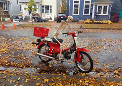 Halloween 2019 (Coastal Elite) Tags: halloween decorations decorated house horror theme residential home houses halifax novascotia canada fall autumn automne nouvelleécosse skeleton riding scooter squelette skull bones moped bike mobylette motorcycle street creepy funny scary honda vintage retro