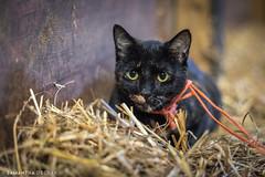 Sweet Rita (Samantha Decker) Tags: greenfield canoneos5dmarkiv pet oldfriendsatcabincreek upstate cute feline canonef50mmf14usm newyork samanthadecker cat ny