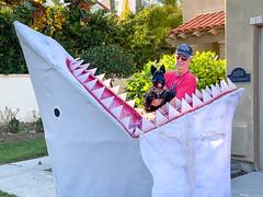 Land Shark II IMG_4866 (Laurie2123) Tags: halloween landshark maggie scottie scottishterrier tom iphone11promax odc odc2019 ourdailychallenge ddc ddc2019 dailydogchallenge