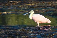 Huntington Beach State Park 10/31/2019 (LindaSC) Tags: