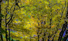 A Walk in the Woods During Autumn (soniaadammurray - On & Off) Tags: iphone collaboration barbarastanzak trees colours nature sky autumn shadows reflections exterior light artchallenge lightroom photoshop seasons spotlightyourbestgroup