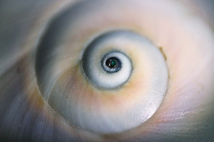 Shell (Jaina G.) Tags: macro shell