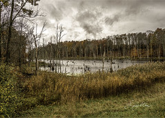 Swamp on a rainy day (jsleighton) Tags: swamp trees reeds grass landscape sky rain clouds water o fgocus