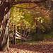 Shadows Of Autumn-HFF!