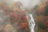 Deep forest (Teruhide Tomori) Tags: falls autumn landscape nature mountain forest tree toyama tateyama japan japon 称名滝 立山 中部山岳国立公園 日本 秋 自然 森 紅葉 teteyama 富山県 滝 fog mist 霧