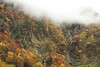 Foggy mountainside (Teruhide Tomori) Tags: falls autumn landscape nature mountain forest tree toyama tateyama japan japon 称名滝 立山 中部山岳国立公園 日本 秋 自然 森 紅葉 teteyama 富山県 fog mist 霧