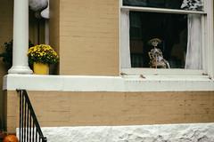 Laid Back Halloween (Mike J Maguire) Tags: washingtondc asahitakumar85mmf19 halloween halloweendecorations skeleton georgetown
