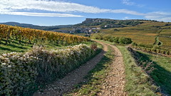 Nice trail (Chemose) Tags: sony ilce7m2 alpha7ii octobre october autumn automne mâconnais bourgogne burgundy southernburgundy bourgognedusud france paysage landscape hdr rochedesolutré rock vigne vineyard vine vignoble fleur flower haie hedge campagne country chemin trail