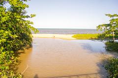 DSC_6982_edited (Proflázaro) Tags: brasil nordeste bahia portoseguro praia água rio árvore areia horizonte viagem viagemparaportoseguro viagempelonordeste viagempelabahia viagempelobrasil paisagem paisagemnatural paisagemdabahia paisagemdonordeste paisagemdobrasil natureza naturezadabahia naturezadonordeste naturezadobrasil ecologia nikon nikond3100