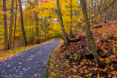 Autumn roads - Tallman Mountain State Park, New York (superpugger) Tags: palisades tallmanmountainstatepark newyorkstate autumn autumninnewyorkstate outdoors nature road foliage peak peakfoliage basalt geology forest windingroads misty fog fuji fujixt1 xt1 fujinon lpugliares