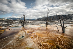 Thermophile Pool (byron bauer) Tags: byronbauer thermal pool fumaroles spring hot water bacteria color steam sky clouds painterly heat yellowstone dead trees sulfer elitegalleryaoi bestcapturesaoi aoi