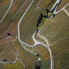 vigne 001 (Jean-Marc Linder) Tags: automne vigne square valais suisse