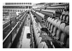 FILM - Wet seats (fishyfish_arcade) Tags: 35mm 800asa analogphotography bw blackwhite blackandwhite doncasterracecourse filmphotography filmisnotdead hp5 istillshootfilm monochrome olympusom1 analogcamera fzuiko50mmf18 film ilford mono rain