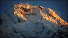 Annapurna glowing (Nepal) (armxesde) Tags: ricoh pentax k3 himalaya nepal mountain berg snow schnee sunrise sonnenaufgang annapurna alpenglow alpenglühen tadapani